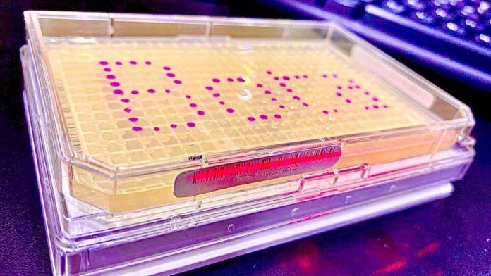 BASF Venture Capital (BVC) investiert in Bota Biosciences (Bota Bio) aus China